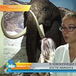 В Новокузнецке обнаружены кости мамонта (видео)